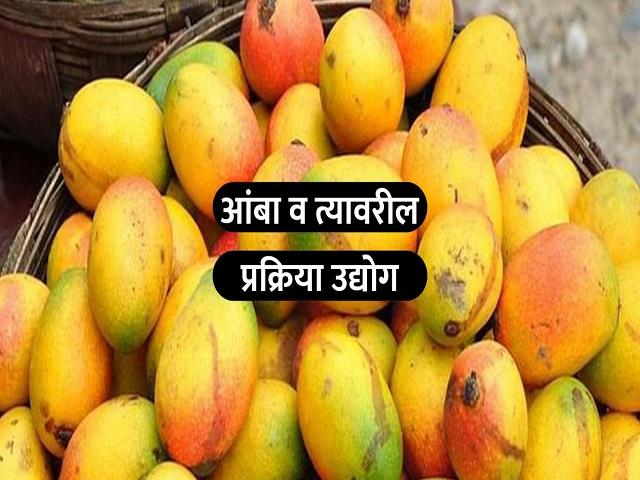 आंब्यापासून बनवा विविध पदार्थ; प्रक्रिया उद्योगासाठी आंबा सूपर फळ