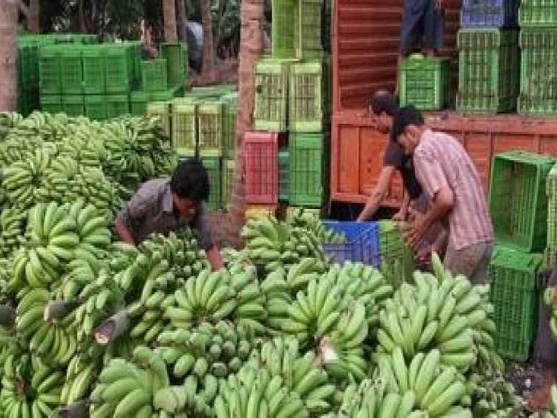 केळीच्या शेतीचं मोबाईल अॅप