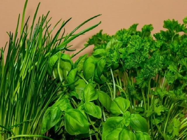 वा !  हर्बल शेतीसाठी सरकार देत आहे 75 टक्के सबसिडी