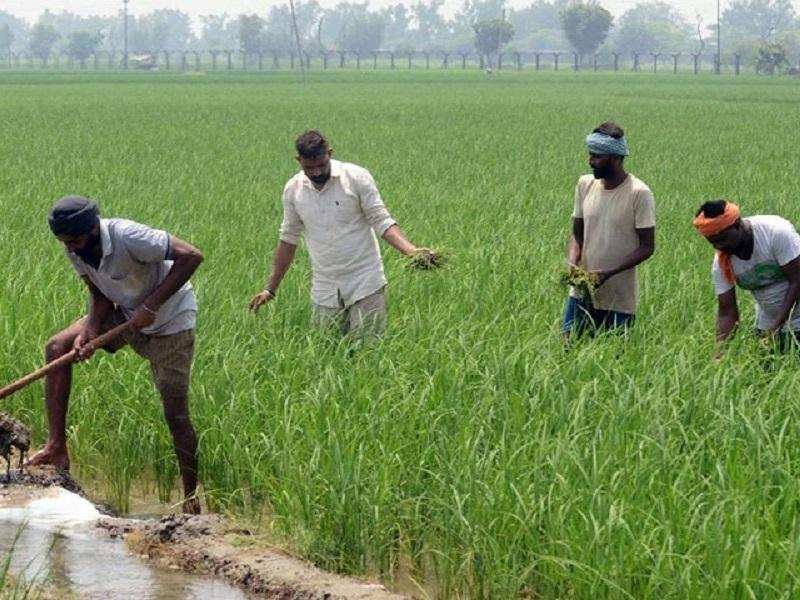 माझं मत - 'शेती हाच उत्तम व्यवसाय,तर शेतकरीच होईल लवकरच राजा'