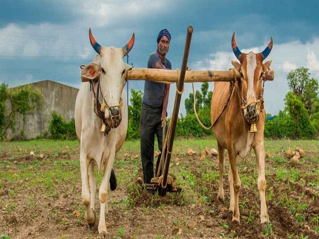 पीएम किसान योजनेचा आठवा हप्ता मोदी आज जाहीर करणार