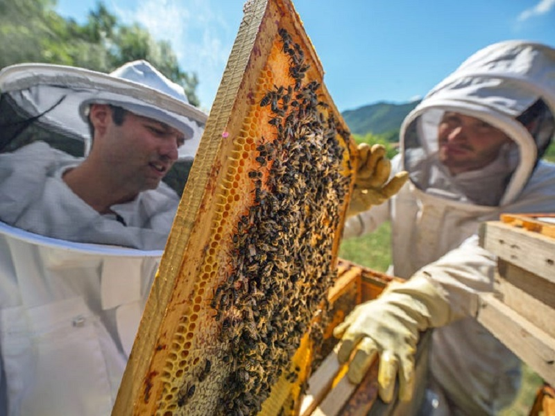 जागतिक मधमाशी दिवस