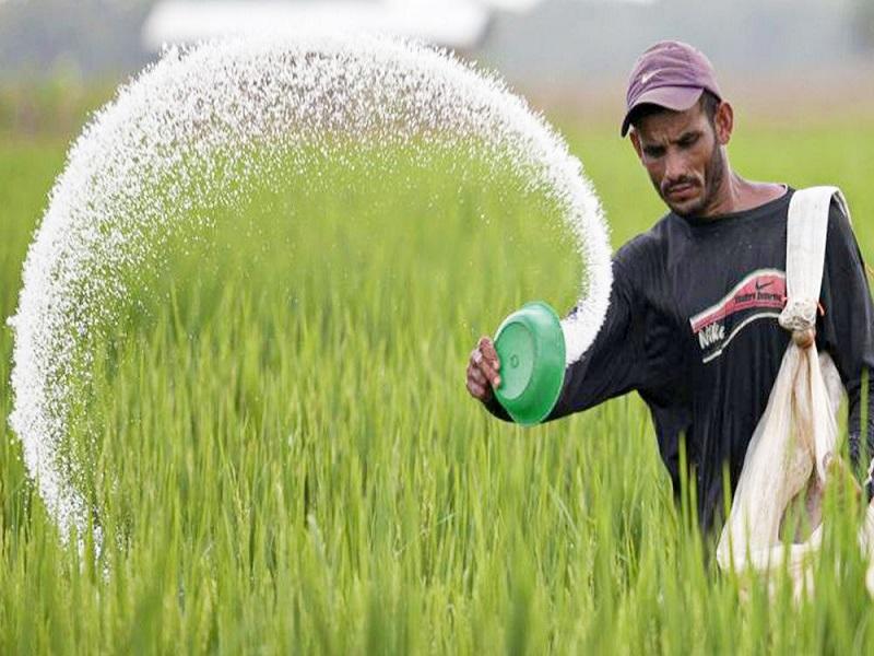 शेतकऱ्यांच्या बांधावर बियाणे,खते द्यावे