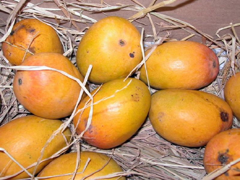 आंबा निर्यात