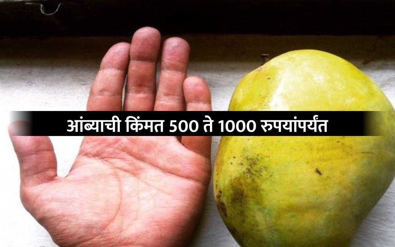 आंबा झाडावर लागताच विकला जातो, बापरे इतके महाग भाव