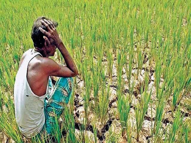 माझं मत - 'या' कमतरतेमुळेच होत आहे शेतकऱ्यांचे उत्पन्न कमी