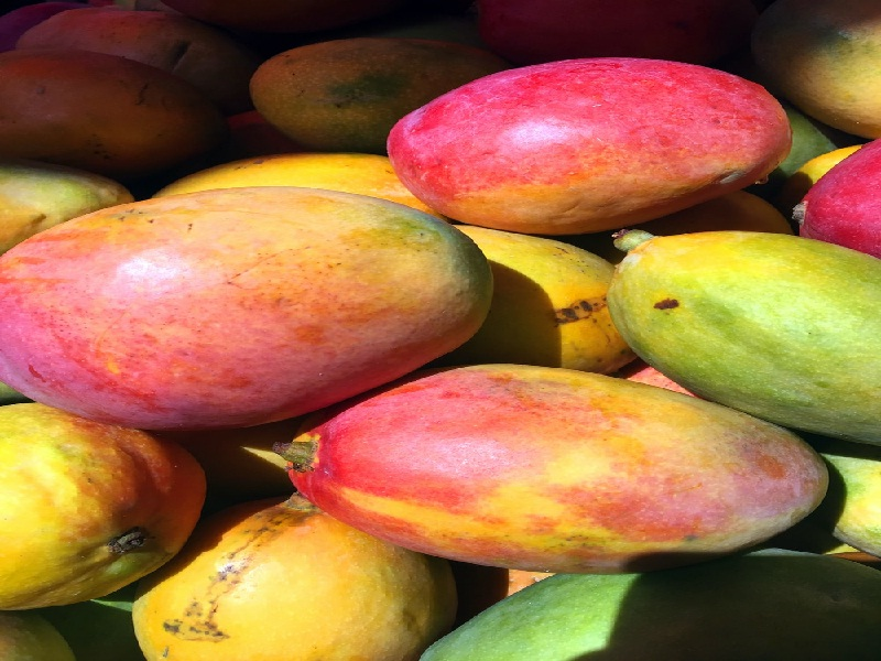 हा आहे जगातील सर्वात महागडा आंबा, किंमत ऐकाल तर थक्कच व्हाल