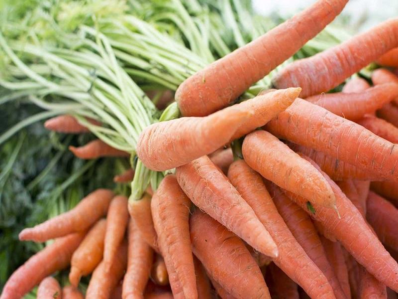 गाजराच्या शेतीतून भरघोस नफा