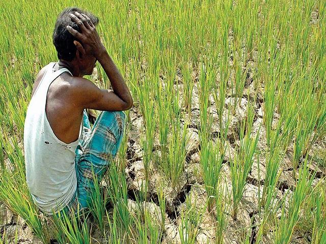शेतकऱ्यांचे नुकसान टाळण्यासाठी गुणवत्ता नियंत्रण प्रयोगशाळांनी कालमर्यादेत बियाणे तपासणी अहवाल द्यावा: कृषीमंत्री
