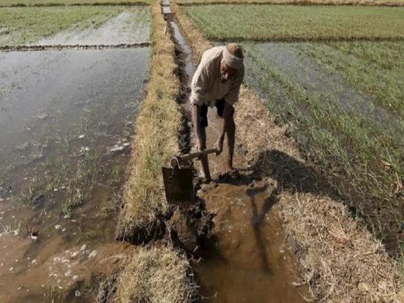 पिकातील पाणी नियोजनाचे महत्त्व