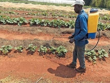 युवा शेतकऱ्याने कापणी यंत्रालाच बनवले फवारणी यंत्र, वाचवेल मेहनत आणि वेळ