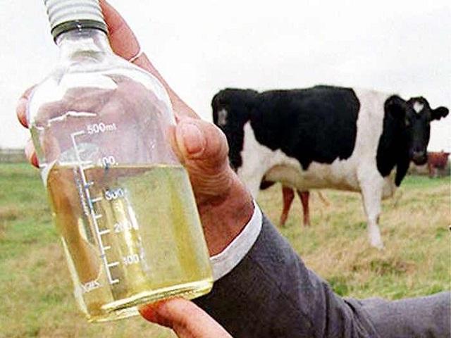 जाणून घ्या! गोमुत्राचे शेतीसाठी होणारे अनेक फायदे, असा करा वापर