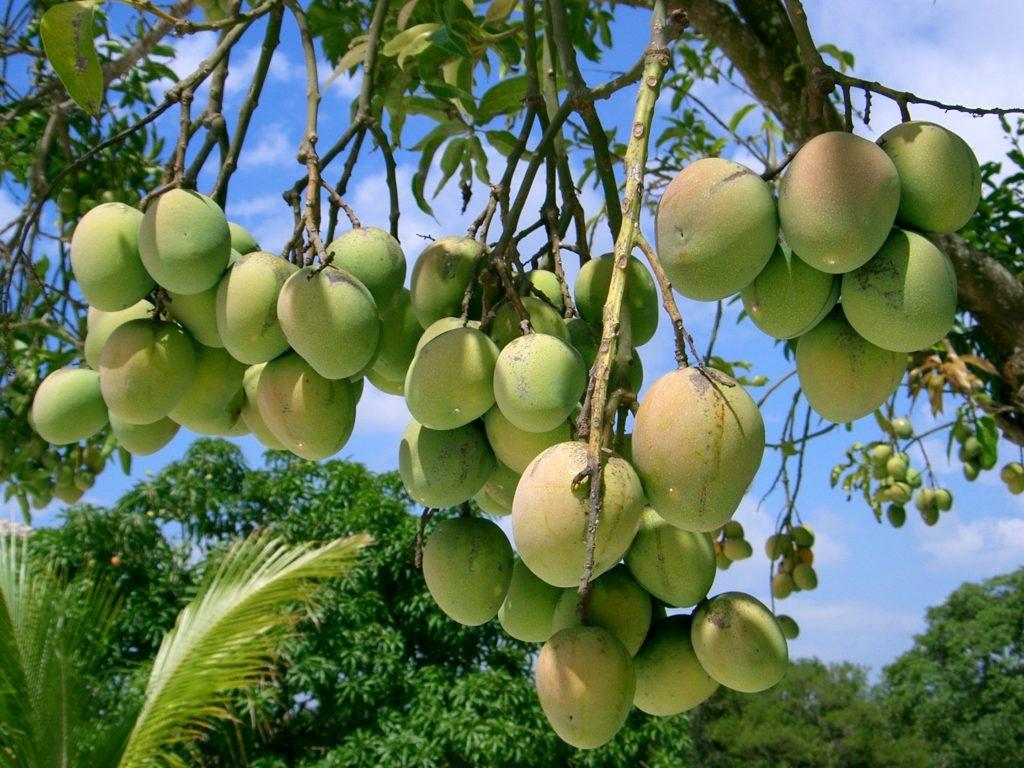 शेतकऱ्यांनी शासनाच्या फळबाग योजनेचा लाभ घ्यावा, कृषी विभागाचे आवाहन