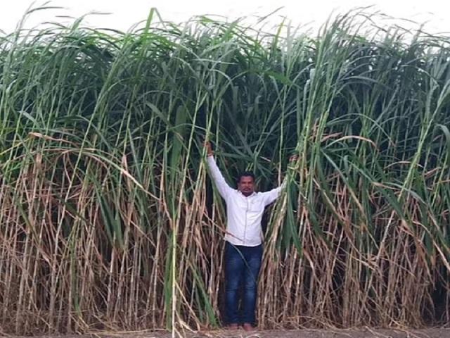 बारावी पास शेतकऱ्याची कमाल, एका एकरात कमावले १५ लाख रुपये