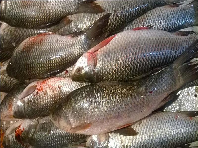fish processing