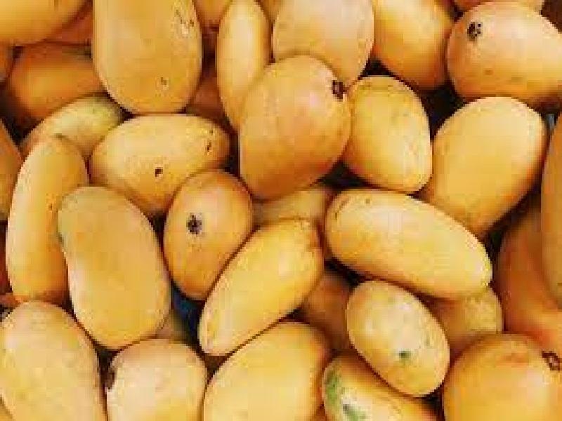 suger free mango