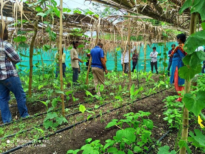 multylayer farming