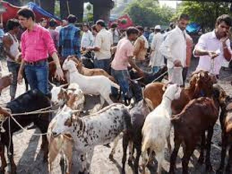 goat selling skill