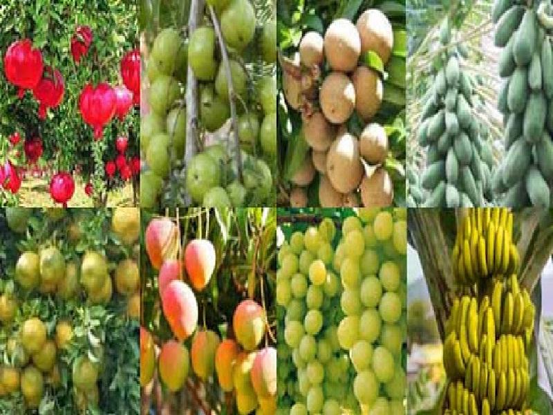 viniculture cultivation