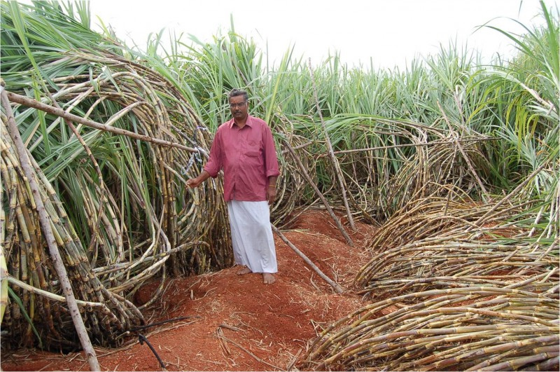 sugarcane bill