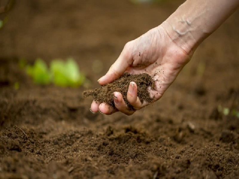 जमिनीची सुपीकता कशी वाढवाल ? Photo-  shutterstock