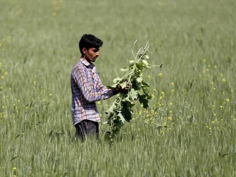 weed benifit in farming
