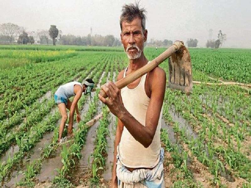 सेंद्रिय किवा शाश्वत शेती