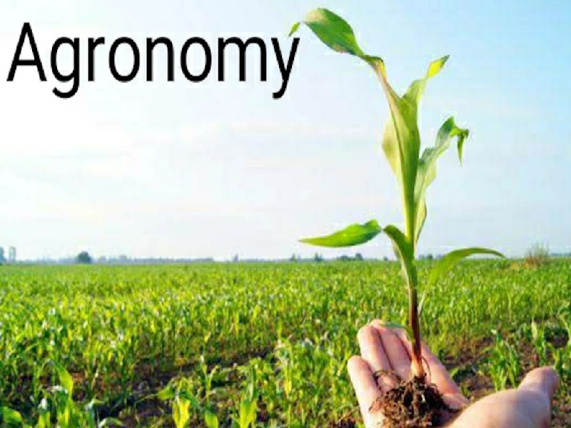 agronomy service