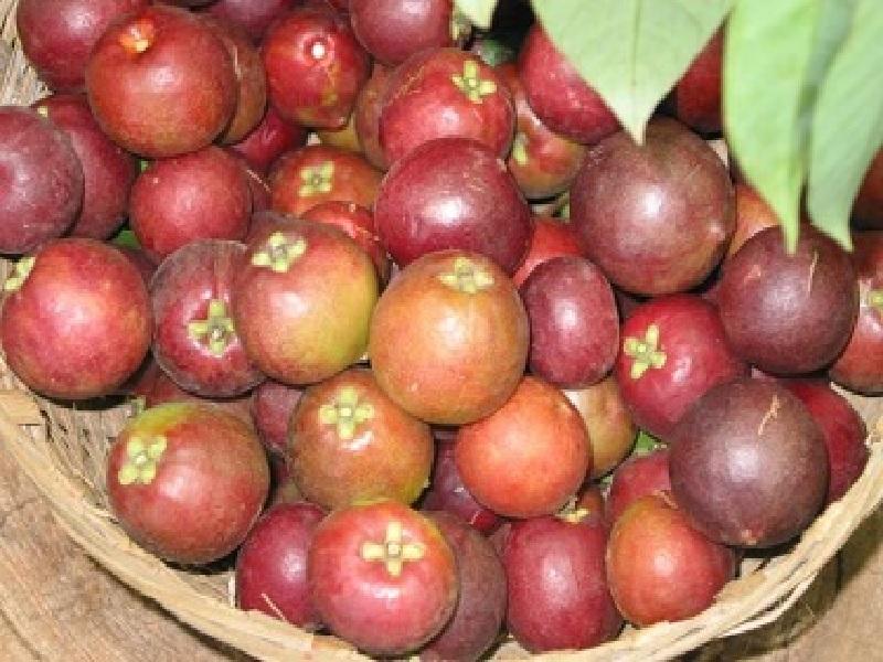 kokam fruit