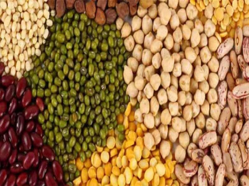 legum grain