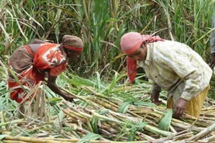 शेतकरी महिलांचे आरोग्य आणि काळजी