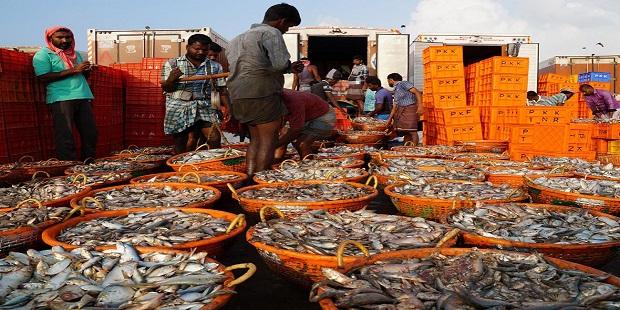 corona virus : effect on fishing business