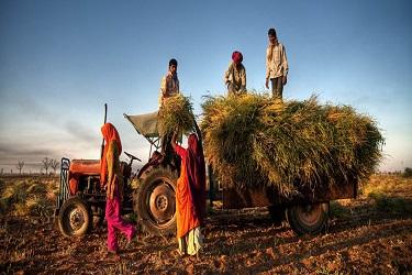जाणून घ्या! अधिक नफा देणाऱ्या शेती व्यवसायातील गोष्टी