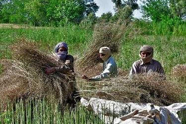कृषी उत्पादनाच्या विपणनला लॉकडाऊनमधून सूट ;  १५ दिवसातून एकदा सुरू राहिल अंगणवाडी