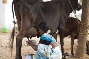 मंदीतही अमूल ने केले शेतकऱ्यांचे २०० कोटींचे  पेमेंट
