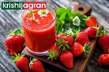 स्ट्रॉबेरी फळांपासून प्रक्रियायुक्त पदार्थ निर्मिती