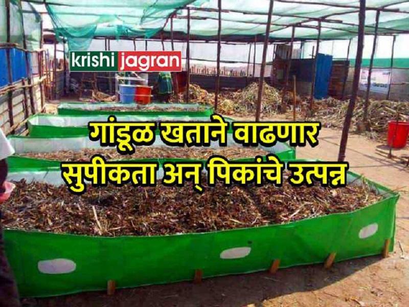 आधुनिक शेतीचा कैवारी आहे  गांडूळ खत;  वाढते जमिनीची सुपीकता