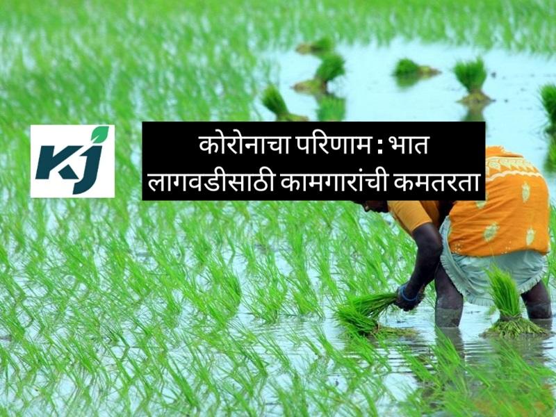 कमी मजुर असतांना कशी कराल भात पेरणी ?  जाणून घ्या लावणीचे सुधारित यंत्र