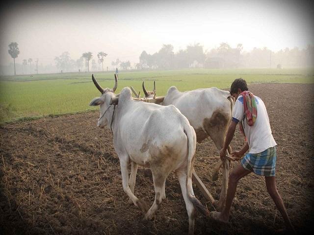 आता शेतकऱ्याला देशाच्या कोणत्याही कोपऱ्यात माल विकता येणार,नवा कायदा लवकरच