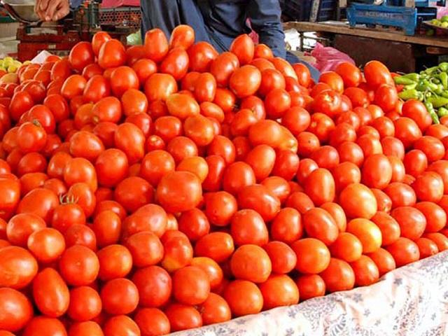 Tomatoes Farming