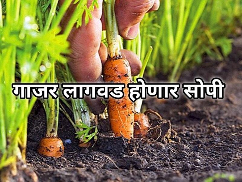 शेतकऱ्यांनो ! 'या' यंत्राने गाजर साफ करणे होईल सोपे;  वाचेल पैसा अन् पाणी