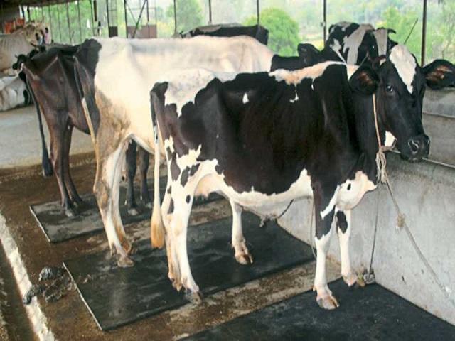 Diseases in Livestock
