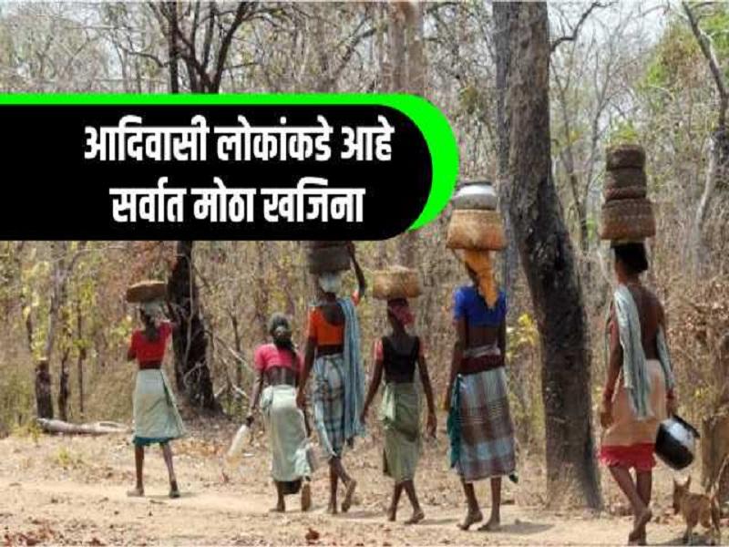 देशातील आदिवसींकडे   ८ हजार औषधी वनस्पतींचा आहे खजिना