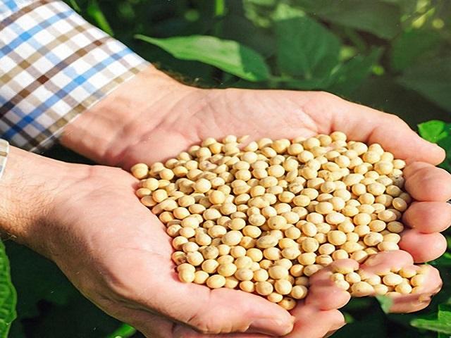 बियाण्यांची भेसळ रोखणार; शेतकरीच तयार करणार गुणवत्तापूर्ण सोयाबीन बियाणे
