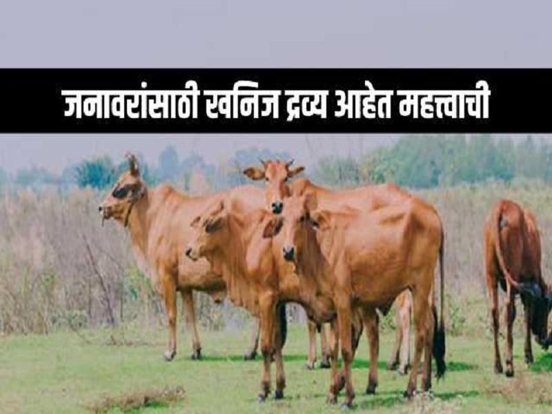पशु प्रजननासाठी आवश्यक असतात खनिज द्रव्य;   जाणून काय आहे महत्त्व