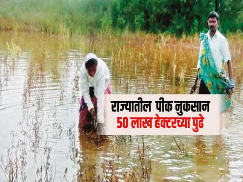पन्नास लाख हेक्टरपेक्षा जास्त परिसरातील पिकांचे नुकसान;  सरकारकडे  शेतकऱ्यांच्या नजरा