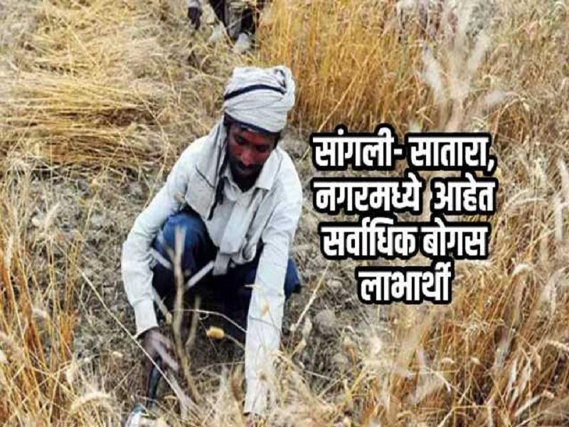 पीएम किसान योजनेचा घोळ : कोणी लाटला मृत शेतकऱ्यांचा पैसा तर कोणी आहे प्राप्तीकर भरणारे धनी