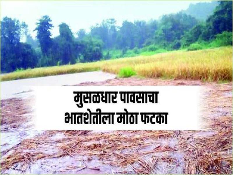 अतिवृष्टीमुळे रत्नागिरी जिल्ह्यातील १२ हजार हेक्टर शेतीचे नुकसान
