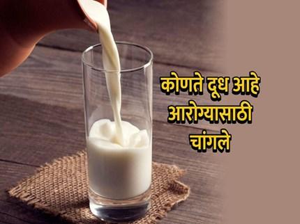 आरोग्यासाठी फायदेशीर आहे ए२ दूध, ए 1 दुधाचे काय आहेत तोटे