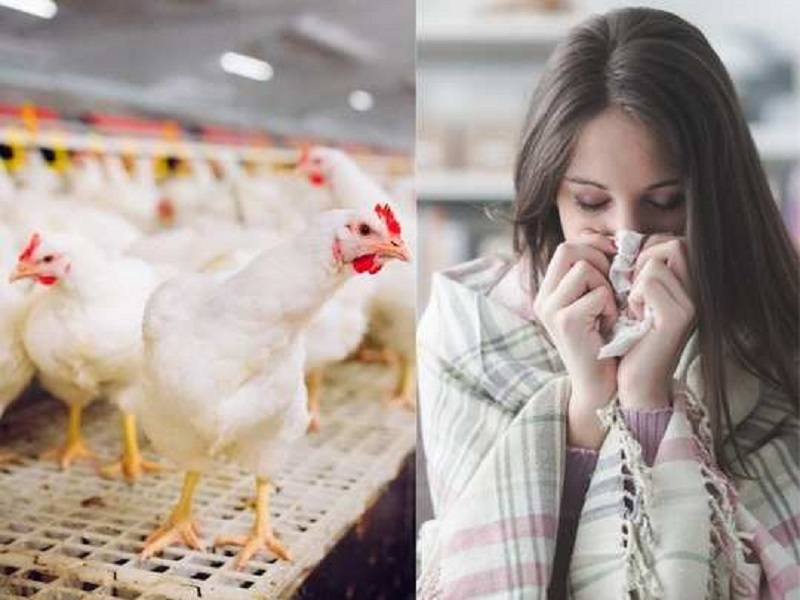 bird flu symptoms